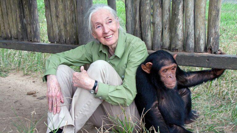 Jane Goodall: coronavirus y catástrofe de especie.